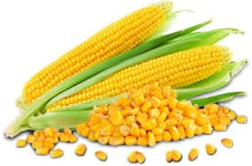 can-cats-eat-corn