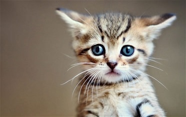 Kittens and cats make bad pets for kids.