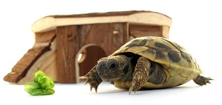 Tortoises make good pets for kids.