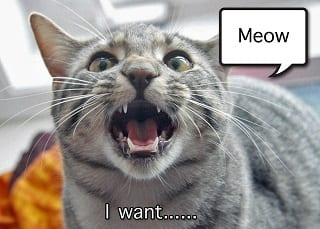 A cat may meow because she wants something.