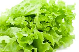 can-cats-eat-lettuce