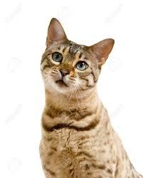 cat-sad-no-sweets
