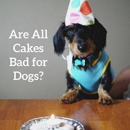 dog and a cake